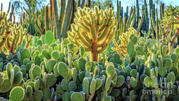 Garden Poster featuring the photograph Cactus Garden Phoenix Arizona by Edward Fielding