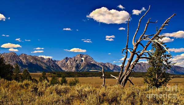 Grand Tetons Poster featuring the photograph Grand Tenton Overlook by Robert Bales