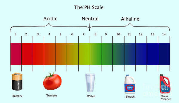 Ph Scale Poster By Spencer Sutton