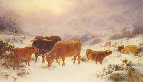 Cattle; Horns; Highland; Scotland; Scottish Poster featuring the painting Hard Times 1898 by Basil Bradley