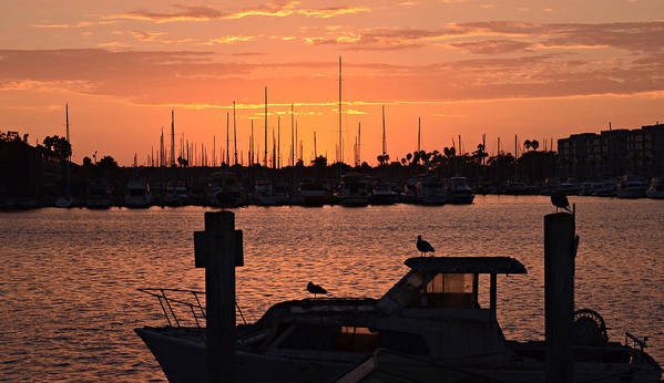 Marina Del Rey Poster featuring the photograph Marina Colors 4 by Fraida Gutovich