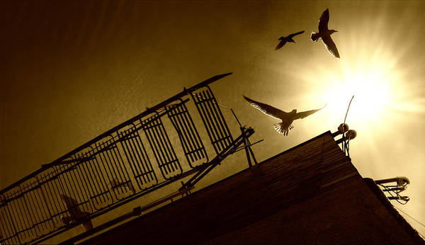 Horizontal Poster featuring the photograph Stairway To Heaven by Photo by marianna armata