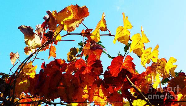 Grape Vineyard Poster featuring the photograph Vineyard 12 by Xueling Zou