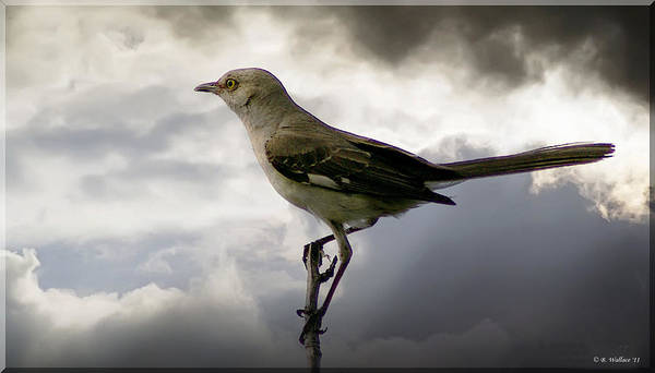2d Poster featuring the photograph Mockingbird by Brian Wallace