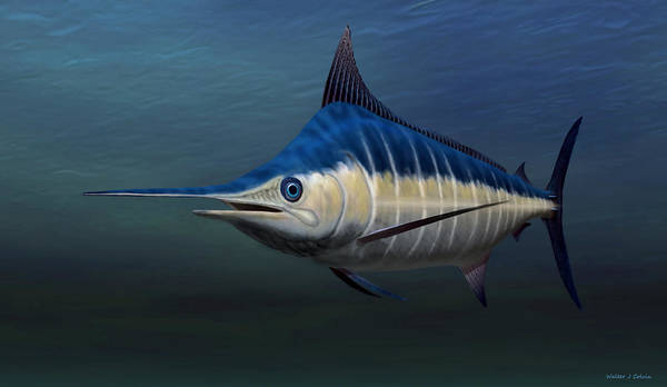 Blue Marlin Poster featuring the painting Blue Marlin by Walter Colvin