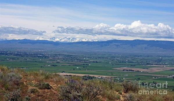 Ellensburg Poster featuring the photograph Ellensburg Valley With Sagebrush And Lupine by Carol Groenen