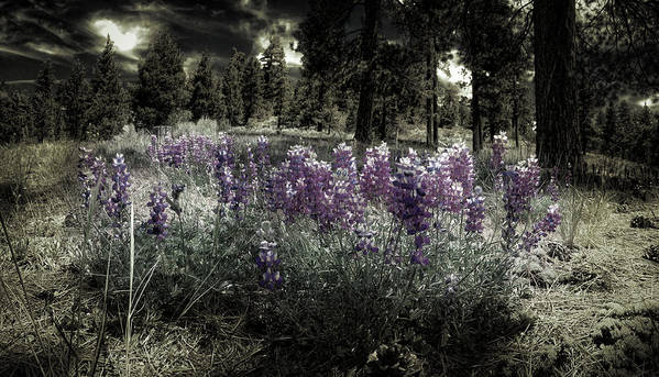Springtime Poster featuring the photograph Purple On The Forest Floor by Douglas Craig