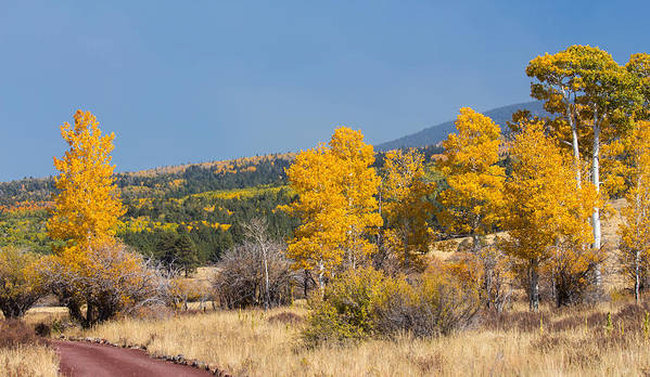Fall Poster featuring the photograph Road To Hart Prairie by Susan Westervelt