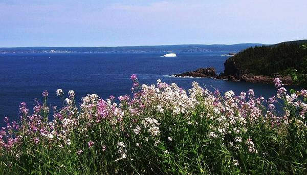 Photograph Iceberg Wild Flower Atlantic Ocean Newfoundland Poster featuring the photograph Wild Flowers And Iceberg by Seon-Jeong Kim