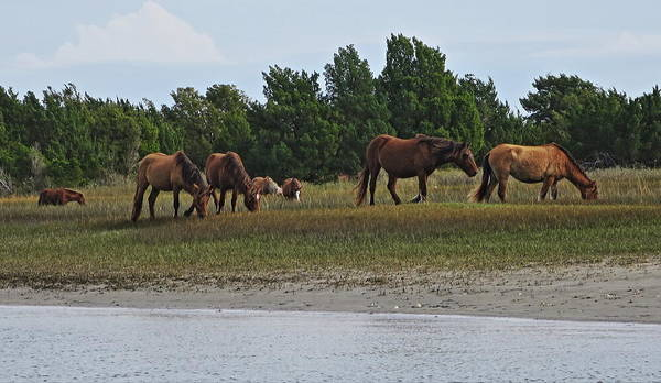 Beaufort Poster featuring the photograph Wild Horses by Rene Barger