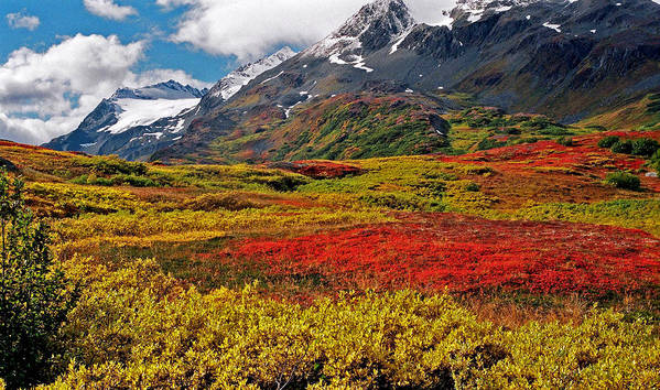 Alaska Poster featuring the photograph Colorful Land - Alaska by Juergen Weiss