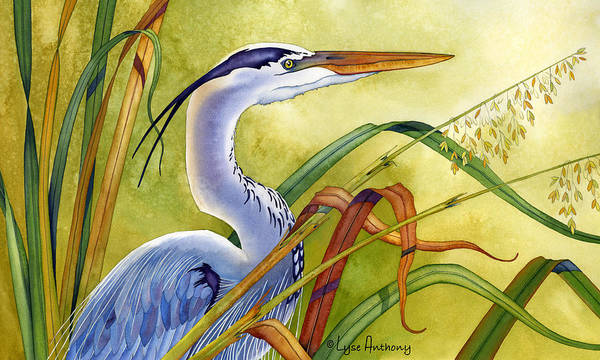 Watercolor Poster featuring the painting Great Blue Heron by Lyse Anthony