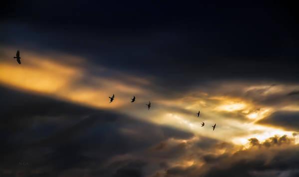 Birds Poster featuring the photograph Seven Bird Vision by Bob Orsillo