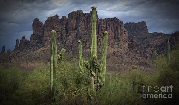 Desert Poster featuring the photograph Superstitious Cactus II by Richard Fernandez
