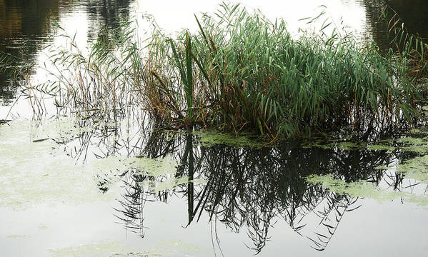 Nature Poster featuring the photograph Water Reflection by David Resnikoff