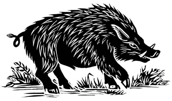 Sus Scrofa Poster featuring the photograph Wild Boar, Woodcut by Gary Hincks