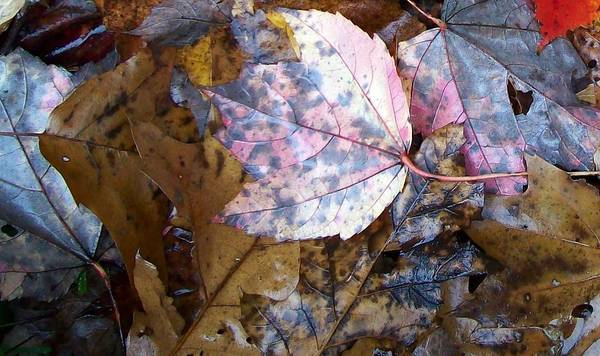 Fall Color Leaf Poster featuring the photograph Colors Of The Fall by Wolfgang Schweizer