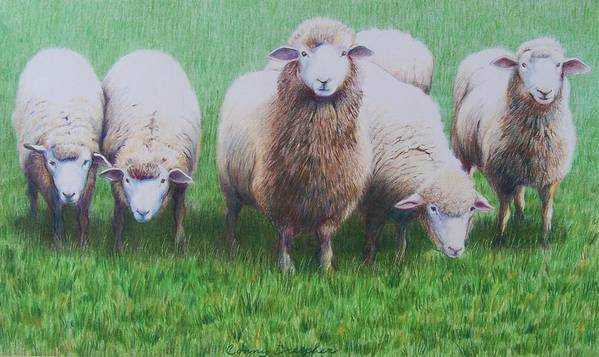 Sheep Poster featuring the mixed media Friends by Constance Drescher