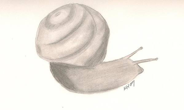 Snail Poster featuring the drawing Snail by Kristen Hurley
