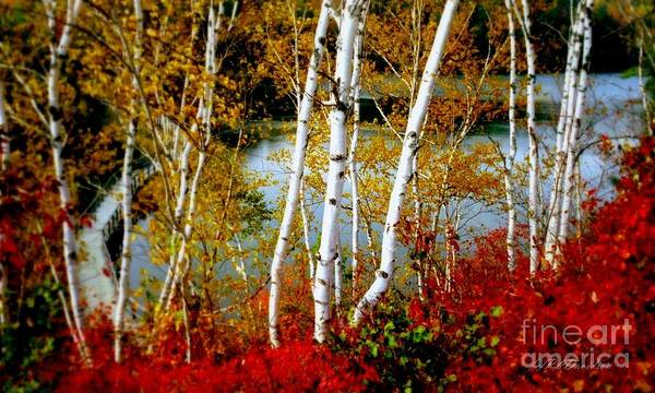 Autumn Poster featuring the photograph Autumn Birch Lake View by Patricia L Davidson