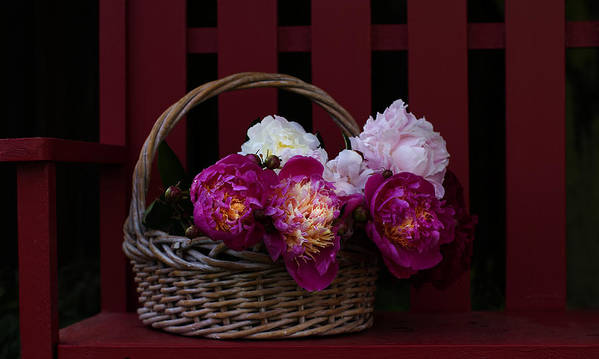 Peonies Poster featuring the photograph Basket On The Bench by Rebecca Cozart