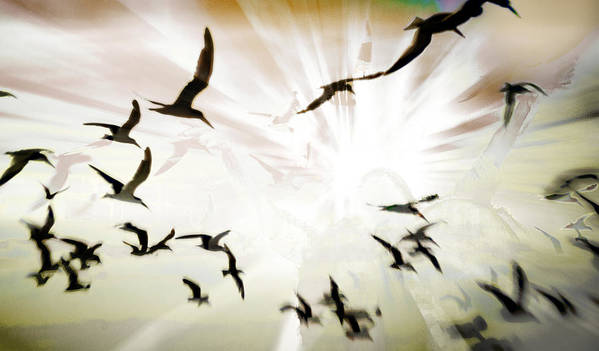 Digital Photography Poster featuring the photograph Birds Explosion by Tony Wood