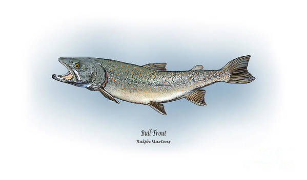 Bull Trout Poster featuring the painting Bull Trout by Ralph Martens