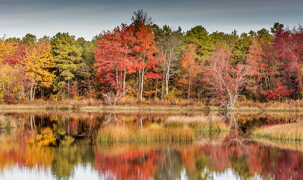 Trees Poster featuring the photograph Fall Reflections by Charles Aitken