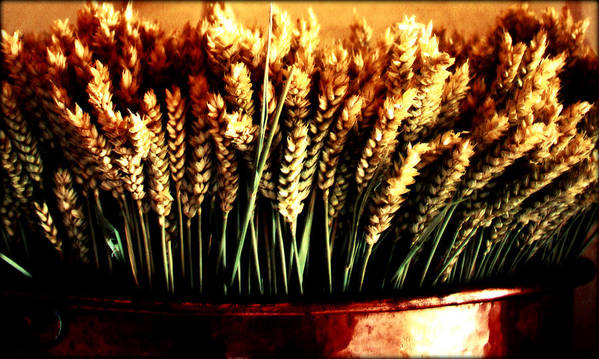 Grain Poster featuring the photograph Grain In Copper Pot by Susie Weaver