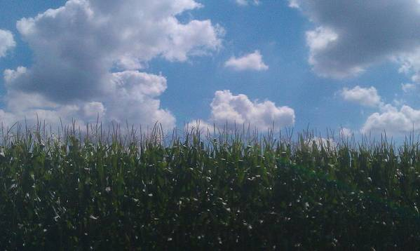 Clouds Poster featuring the photograph Harvest Time by Bc Adamkowski
