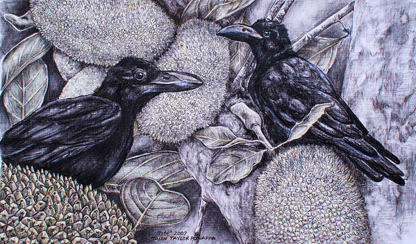 Birds Poster featuring the drawing Jungle Crows On Jackfruit by Trish Taylor Ponappa