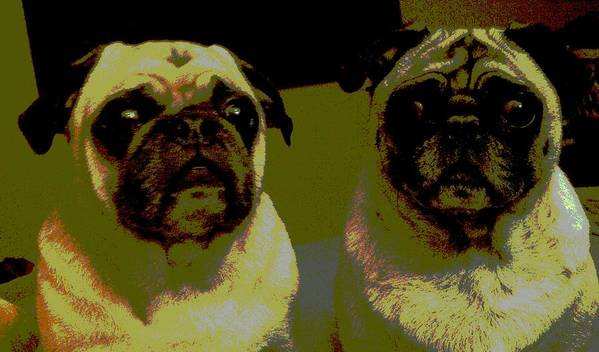 Pugs Poster featuring the photograph Retro Pugs by HP Hwang