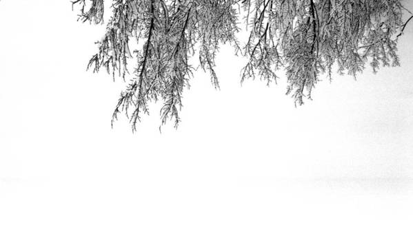 Abstract Poster featuring the photograph Snow On The Branches Two by Lyle Crump