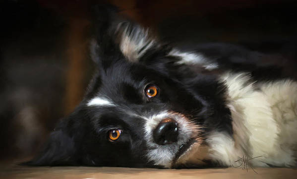 Collie Poster featuring the painting Border Collie by Robert Smith