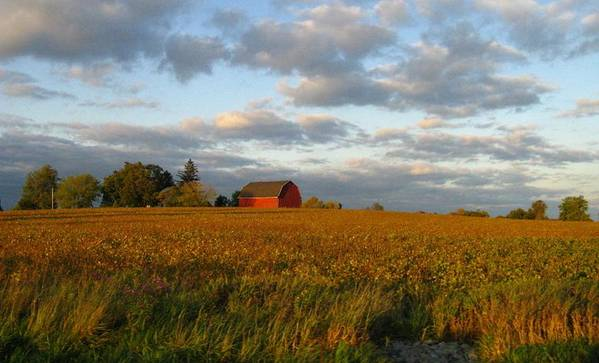 Landscape Poster featuring the photograph Country Backroad by Rhonda Barrett