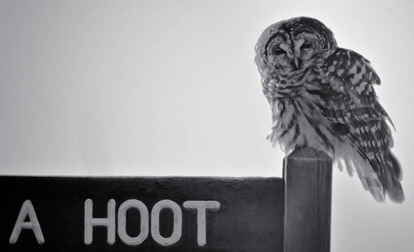 Barred Owl Poster featuring the photograph Don't Pollute by Dave Weth