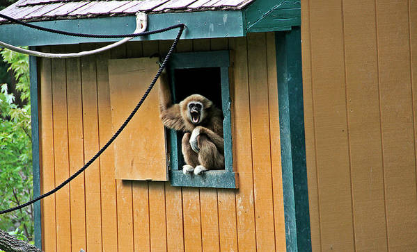 Monkey In A Window Photograph Poster featuring the photograph Keep It Down Out There by Dan Sproul