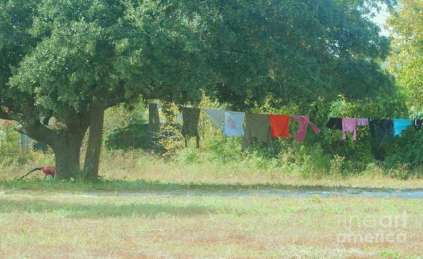 Laundry Poster featuring the photograph Laundry Hanging From The Tree by Michelle Powell