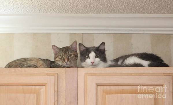 Cat Poster featuring the photograph Love Cats by Michelle Powell