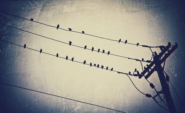Birds On Wires; Abstract; Poster featuring the photograph Ornithological Orchestration by Stevie Rose