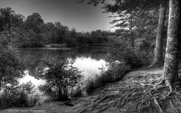 Landscape Poster featuring the photograph Reedy Creek Park by Maurice Smith