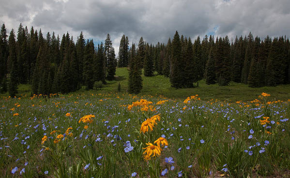 Colorado Poster featuring the photograph Rocky Mountain Bloom by Susan Rovira