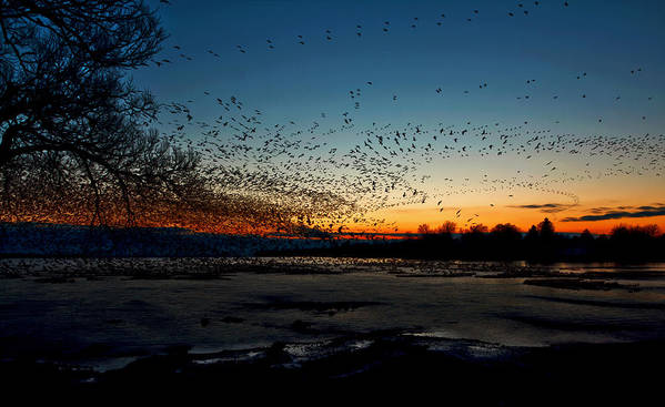Matt Molloy Poster featuring the photograph The Swarm by Matt Molloy