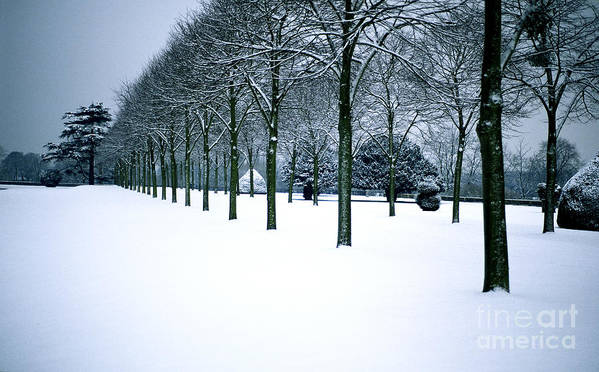 Trees Poster featuring the photograph Trees In Snow by Lana Enderle