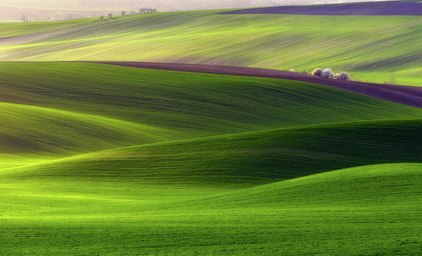 Fields Poster featuring the photograph Verdant Land by Piotr Krol (bax)