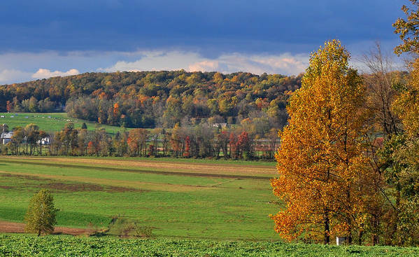 Autumn Poster featuring the photograph Autumn Foliage by Kimberly Little