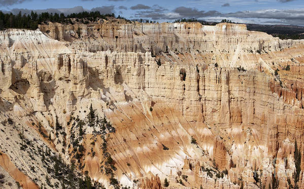 Sandra Bronstein Poster featuring the photograph Bryce Canyon Vista by Sandra Bronstein