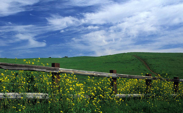 Landscapes Poster featuring the photograph Fence And Flowers by Kathy Yates