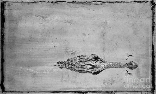 Alligator Poster featuring the photograph Gator And Dragonfly by Jim Wright