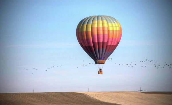 Horizontal Poster featuring the photograph Hot Air Balloon And Birds by Photo by Greg Thow